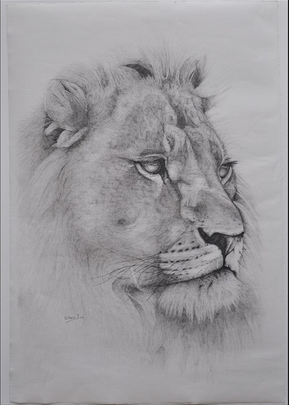 A pencil drawing by Ivo Staes