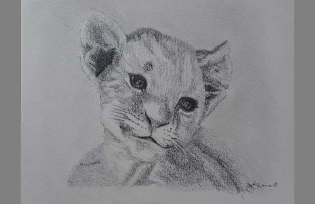 "Lion Cub Drawing. ""Lion Cub"" by Christina"