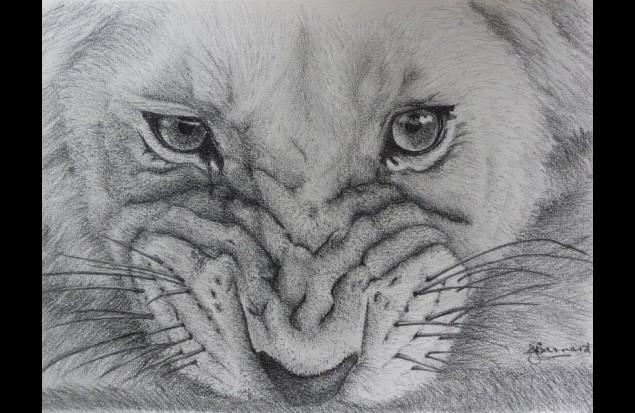 Pencil Drawing  create...