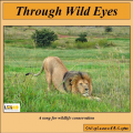 """Through Wild Eyes"" MP3 download"