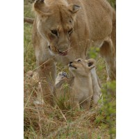 LionAid Charity Personal Message Picture Postcard - The Gift of Giving