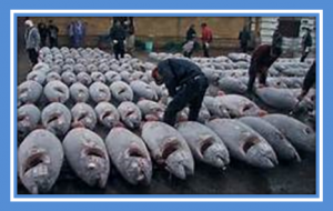 Bluefin tunas bargained against elephants