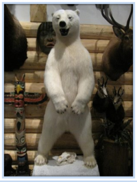 Commercial trade in polar bears : not cultural, not subsistence, not necessary
