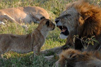 Dad and cub