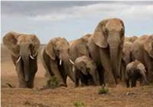 Flawed economic models will not conserve elephants