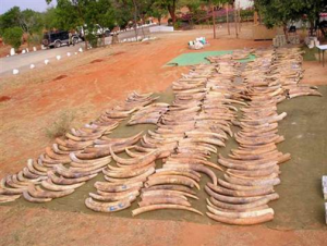 Illegal Ivory, DNA and CITES