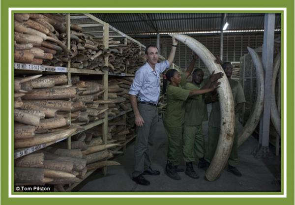 Ivory stockpiles