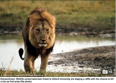 Lion hunt raffle