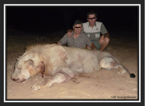 Lion trophy hunting in Mozambique strictly controlled?