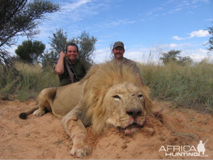 lionaid lion trophy hunting is not sustainable it cannot be