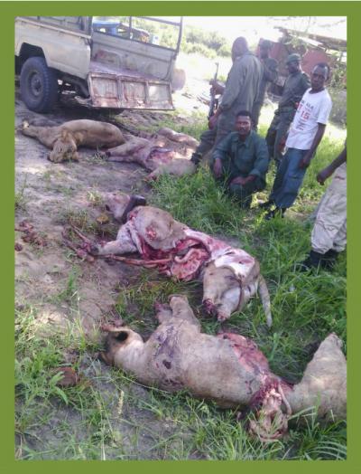 Lions killed in Tz