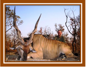 Lord Derby Eland destined for South African farms to make trophy hunting easier?