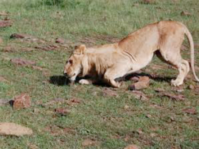 Masai Mara poisoning