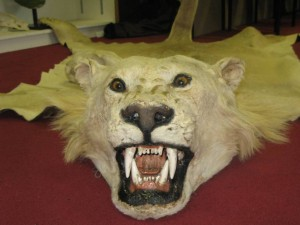 Recent Press Release on our Lion Trophy Import Ban Campaign