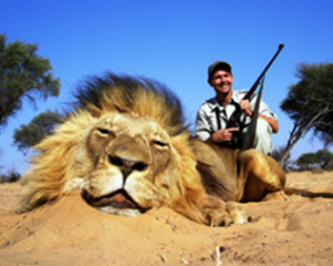The Effects of Lion Trophy Hunting on Lion Populations