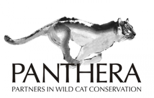 The Panthera Foundation attempts to explain..