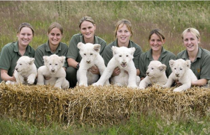 White lions, West Midland Safari Park and the Kinoshita Circus in Japan
